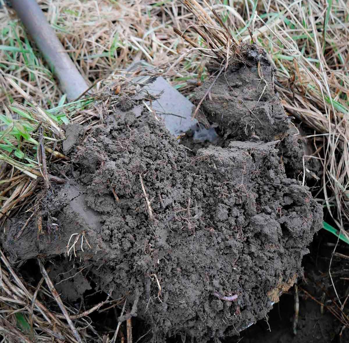 Hyvinvoivassa-maassa-sienet,-bakteerit-ja-muut-mikrobit-välittävät-ravinteita-kasveille
